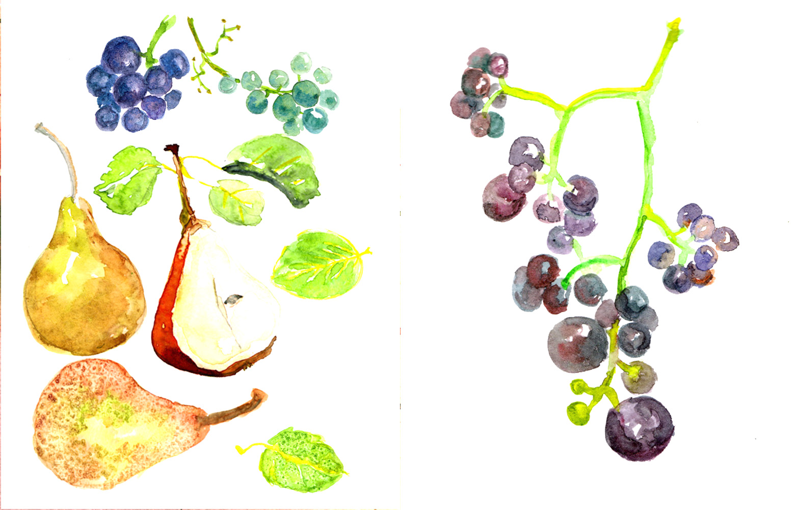 Watercolour, Grapes and Pears, 2015